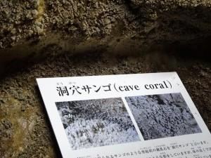 洞穴サンゴ(サンゴ状の鍾乳石)