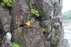ヘビ岩の縞模様(実は地層のすじ)
