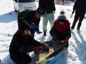 ホタテ貝殻の出荷作業